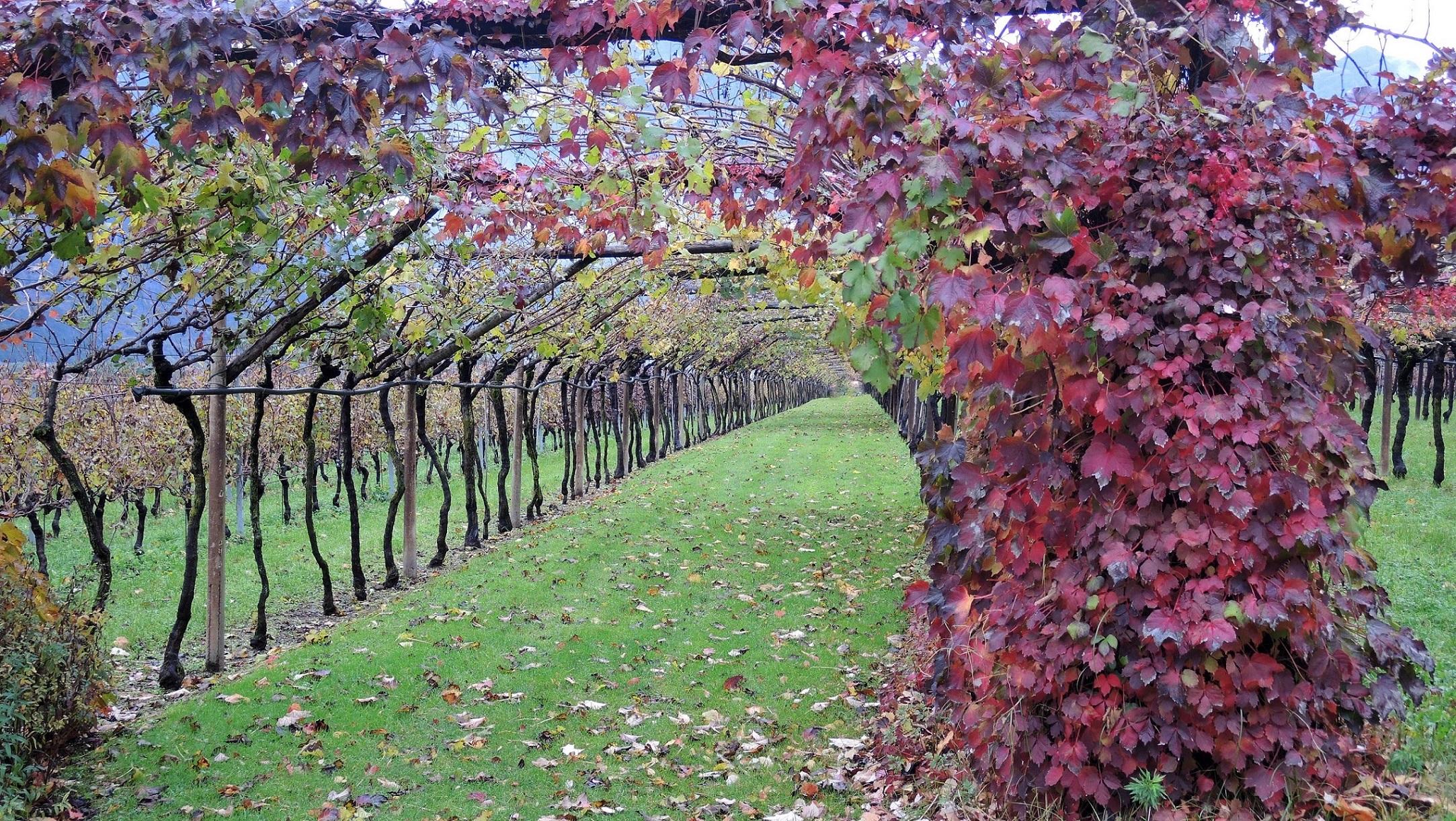 05-Trentino Doc 2014 Nov (36)